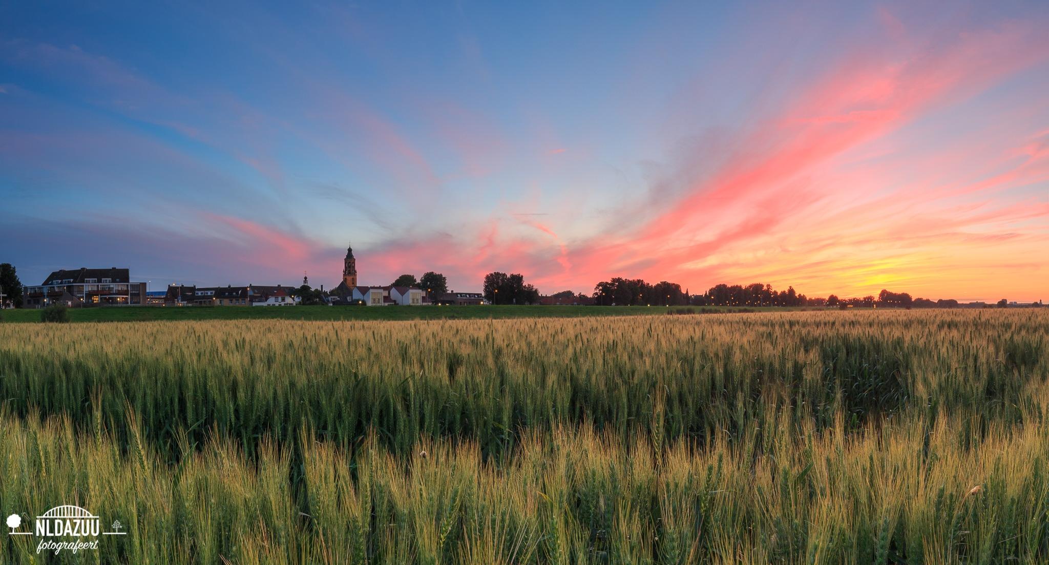 Huissen graanveld zonsondergang after glow (panorama)…..