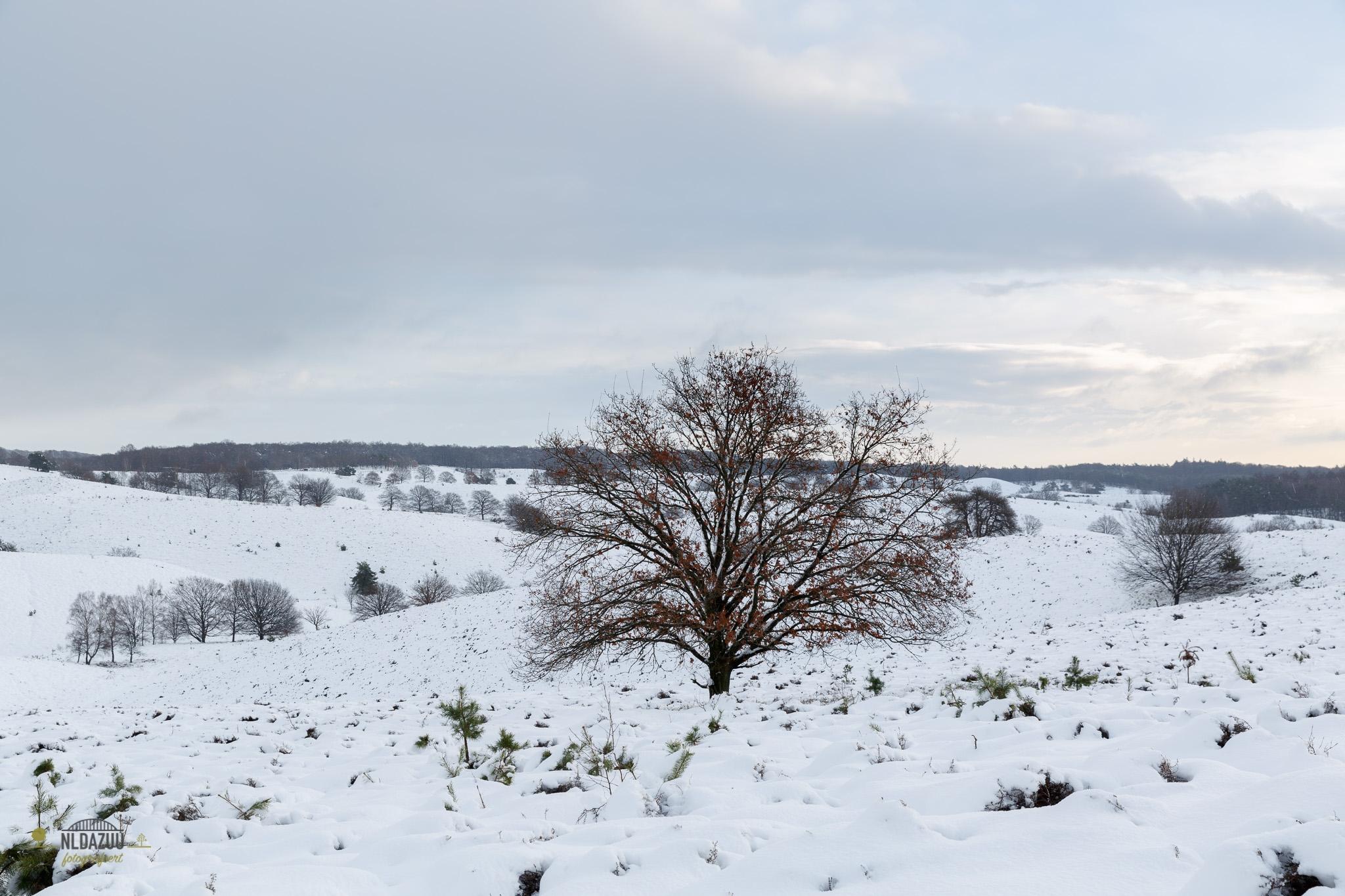 Een klassieker inmiddels, de boom op de Posbank