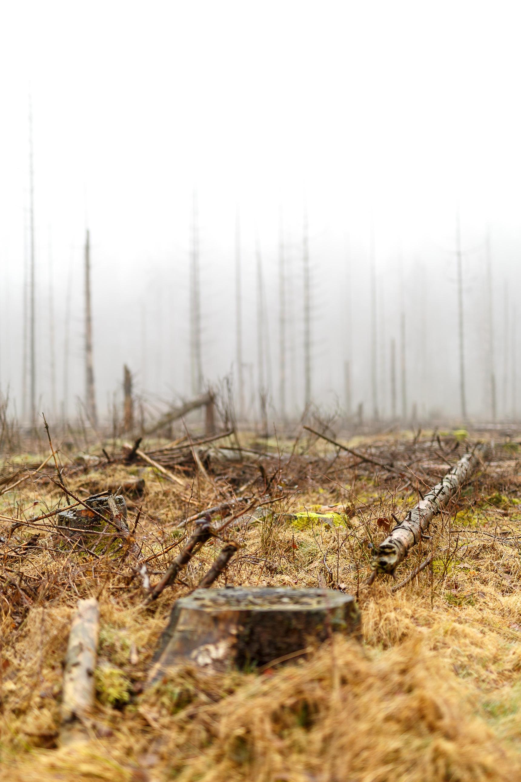 Dag 7 nldazuu 50 mm. challenge: somber