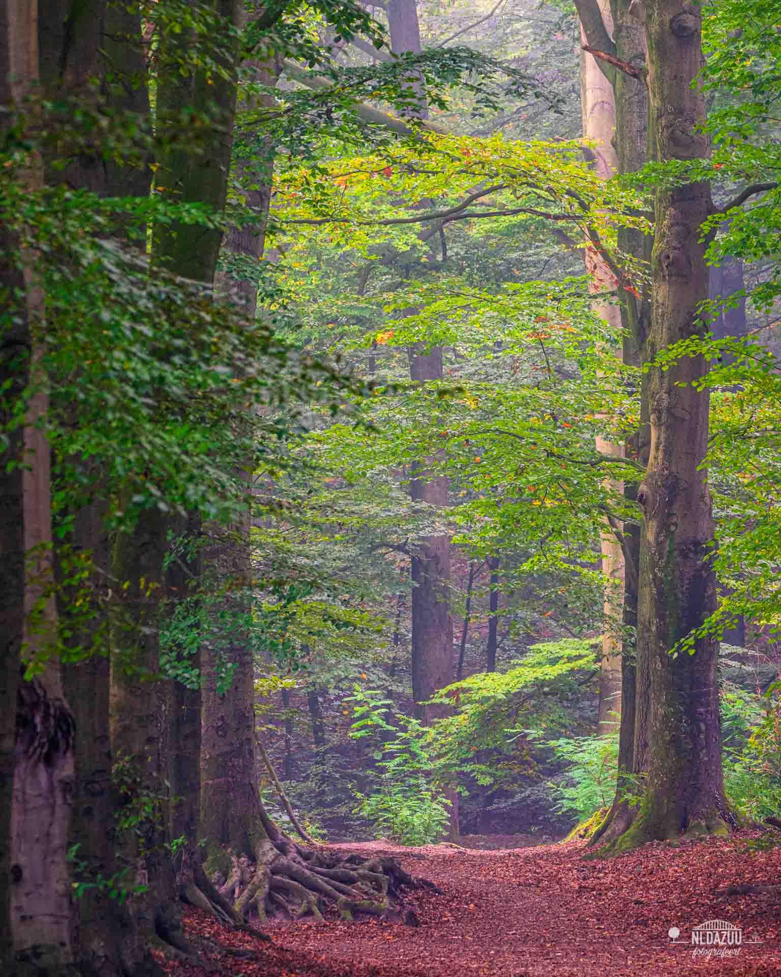 ***Transitie*** mooiste aan het seizoen herfst, de transitie van zomergroen, naar langzaam de herfstkleuren. Het rode tapijt op de grond maakt de sfeer compleet.
