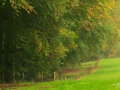 Workshop-Herfstlandschappen-0020