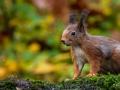 Geen herfst zonder eekhoorns