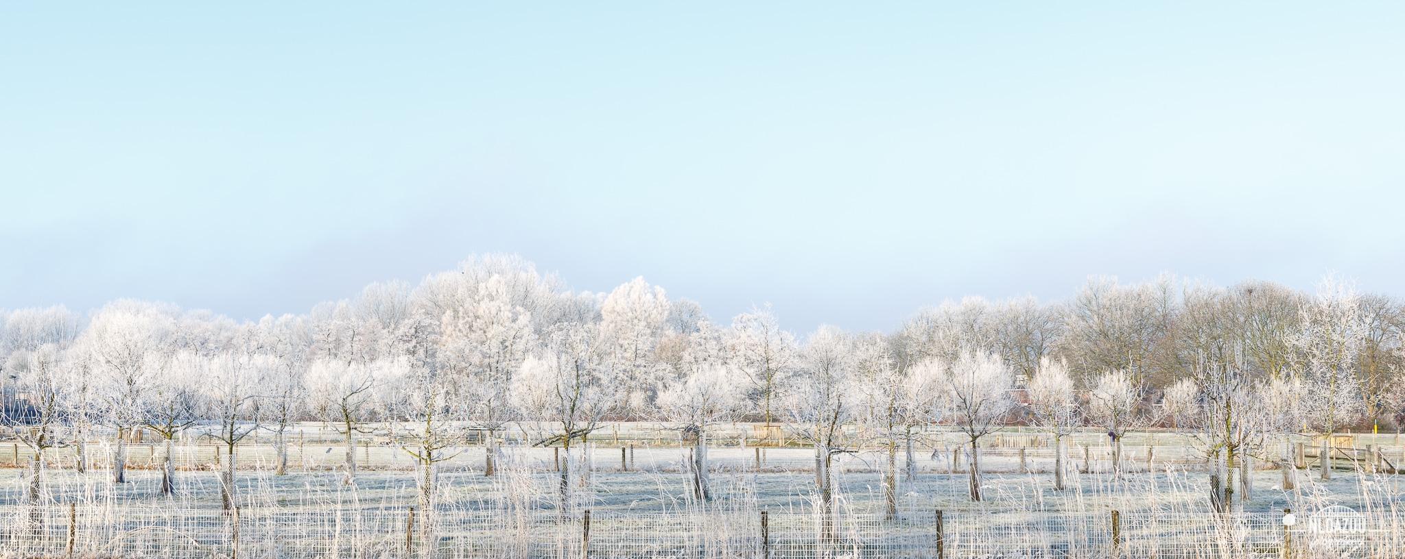 Aangevroren mist te Elden