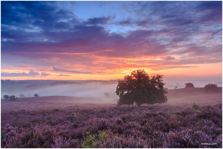 Posbank- kleurrijke zonsopkomst