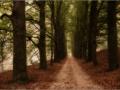 Walking in Wonder (19 van 78)