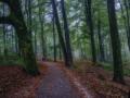 nldazuu_walking_in_wonder (51 van 78)
