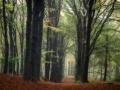 nldazuu_walking_in_wonder (54 van 78)