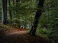 nldazuu_walking_in_wonder (59 van 78)