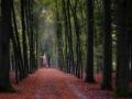 nldazuu_walking_in_wonder (60 van 78)