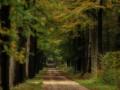 nldazuu_walking_in_wonder (69 van 78)