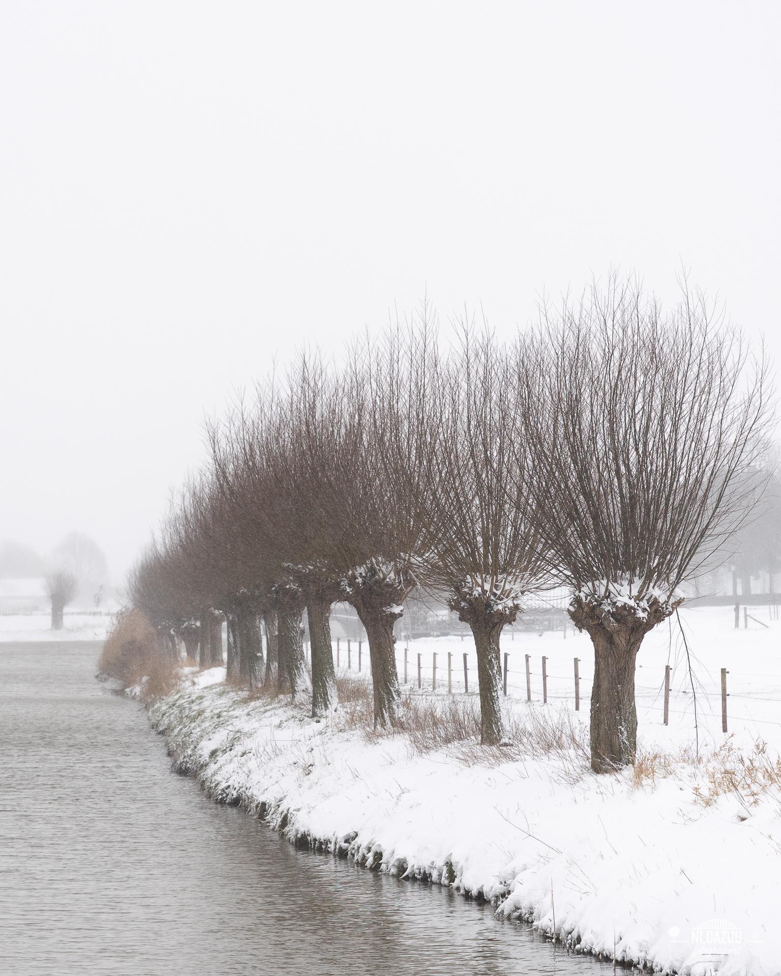 WinterseBeelden20210_0002