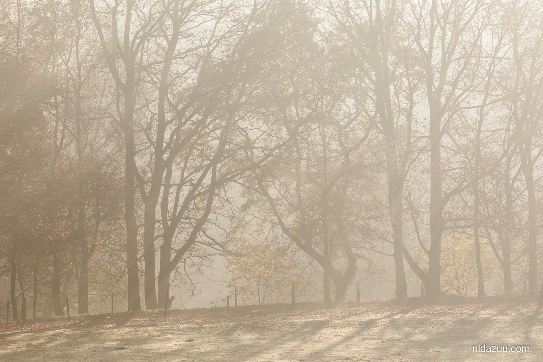 foto van bomen in de mist