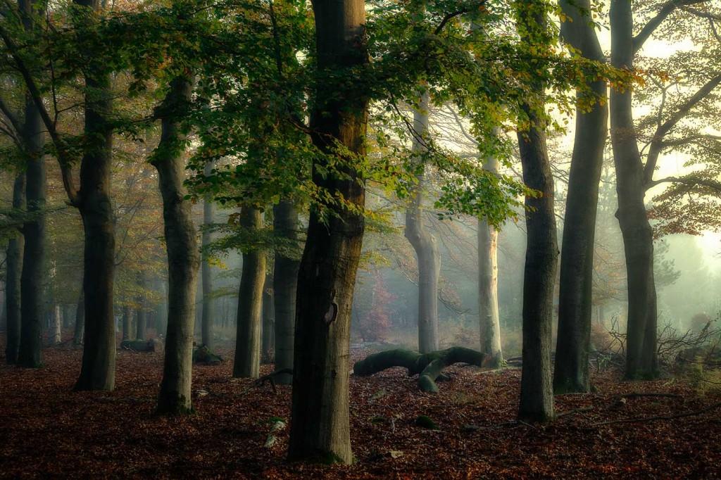 Sprookjes bos, bos, forrest, wood, trees, bomen, takken, bladeren, nevel, sfeer, mystiek, beuken boom, beech tree, oude reemsterweg, N224, Ede, Ginkelseheide eo.