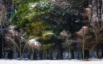 Winters December