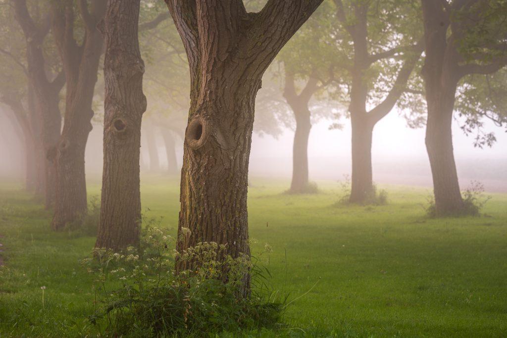 Betuwe, De Vlinder, Fog, foggy, Gelderland, Golden Hour, Gouden uur, landschap, Mariënwaerdt, mist, natuur, nevel, nldazuufotografeert.com, Ravenswaaij, Ronald Verwijs, sfeervolle ochtend, Uiterwaarden, voor dag en dauw, zonsopkomst