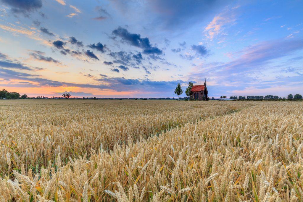 Lingewaard, Huissen, Bemmel, graanveld, zomer landschap, graan, zomer