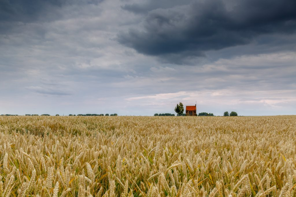 zomers landschap, graanveld, maria kapelletje, monument