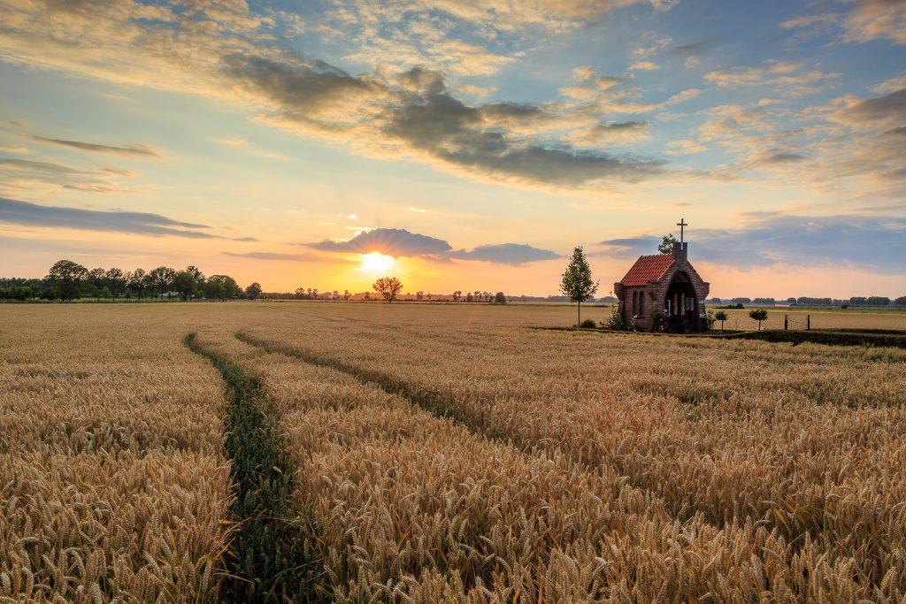 graanveld, zomer landschap, zonsondergang