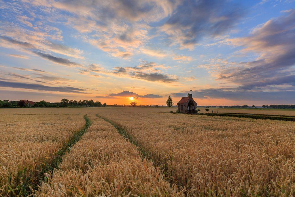 zomer landschap, graanveld, maria kapelletje