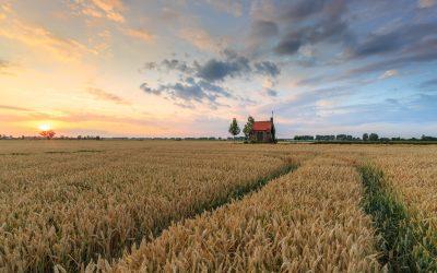 Zomer landschap fotograferen bij het graanveld