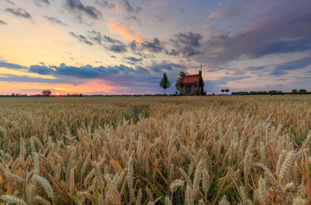 zomer landschap, graanveld, maria kapel