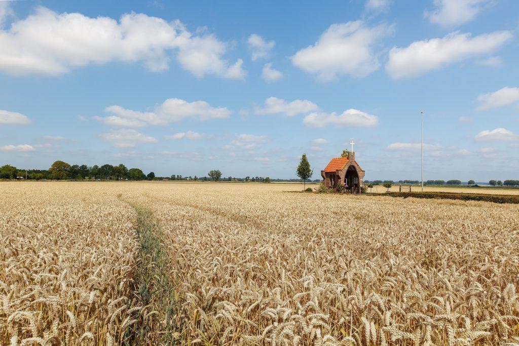 zomer landschap, graanveld, Huissen, Lingewaard