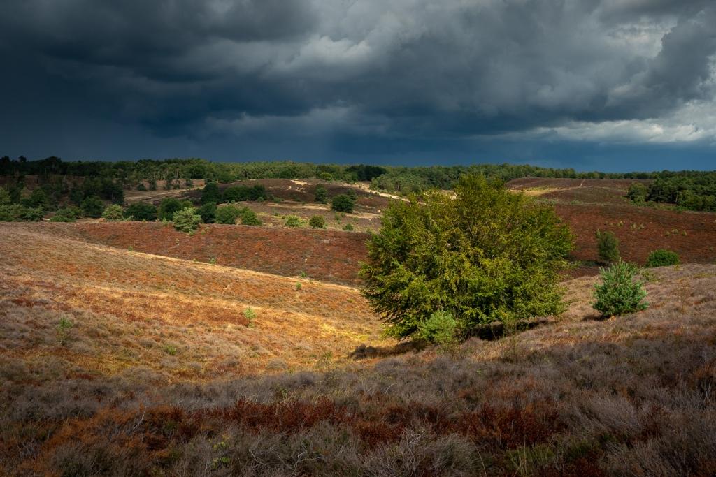 Posbank, regen, boom, heide, landschap, Sony A7III, Herikhuizerveld, Zijpenberg