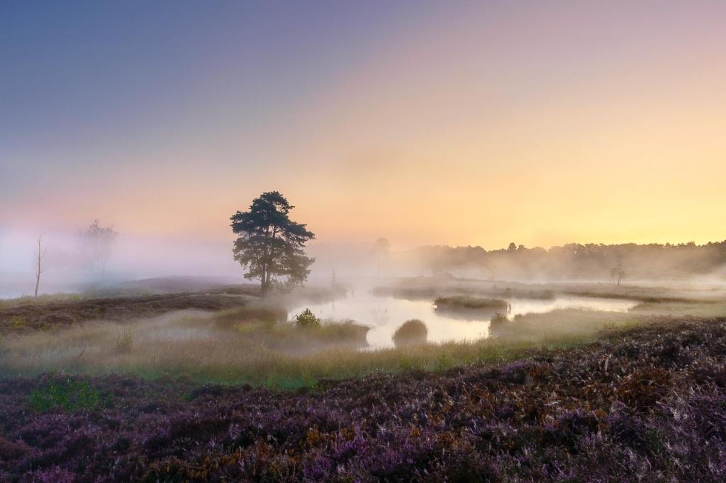 landschapfotografie Sony A7III mist en zonsopkomst Hatertse en Overasseltse vennen