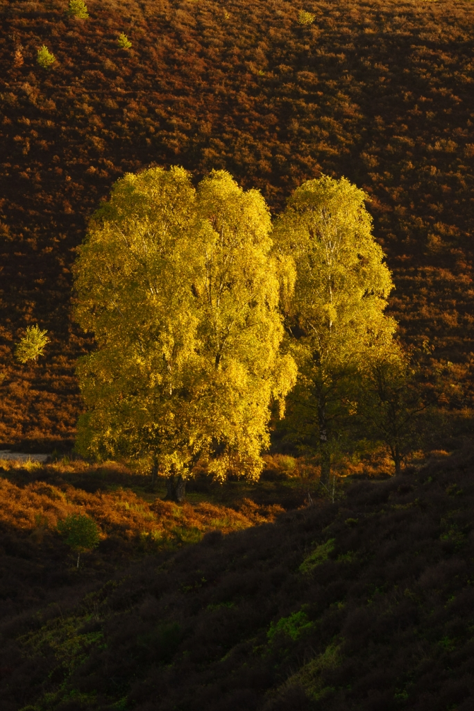 Posbank, Bomen, natuur, landschapfotografie, herfstkleuren