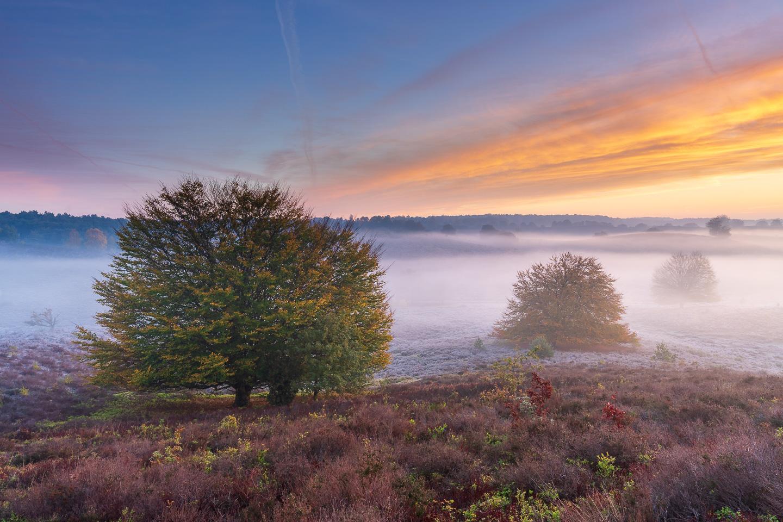 Posbank, Bomen, natuur, landschapfotografie, mist, kleuren, rainbow colours