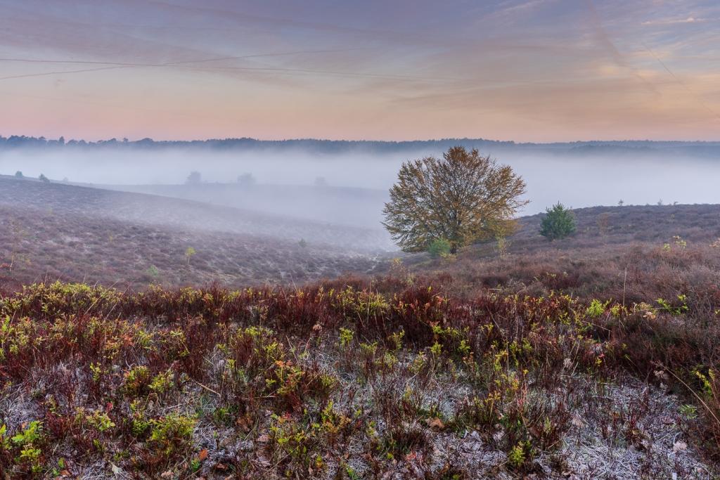 Posbank, Bomen, natuur, landschapfotografie, mist, vorst