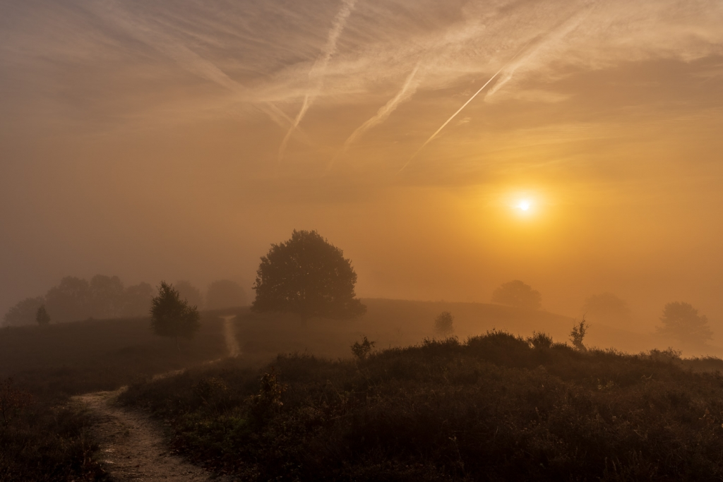 Posbank, Bomen, natuur, landschapfotografie, mist
