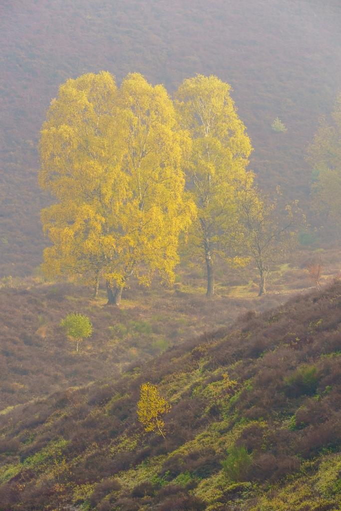 Posbank, Bomen, natuur, landschapfotografie
