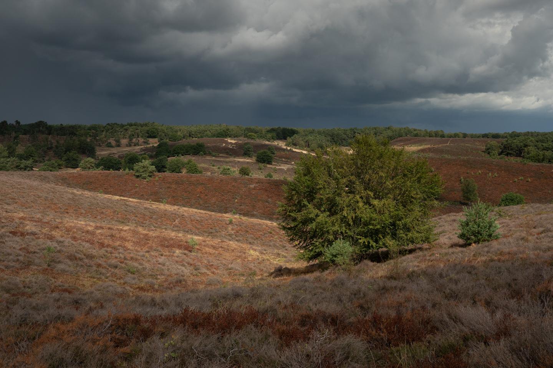 Posbank, Zijpenberg, boom, heidelandschap