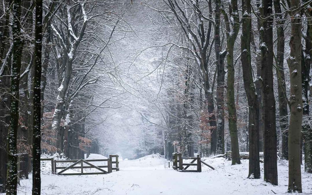Winter wonderlaan, oud reemsterlaan N224
