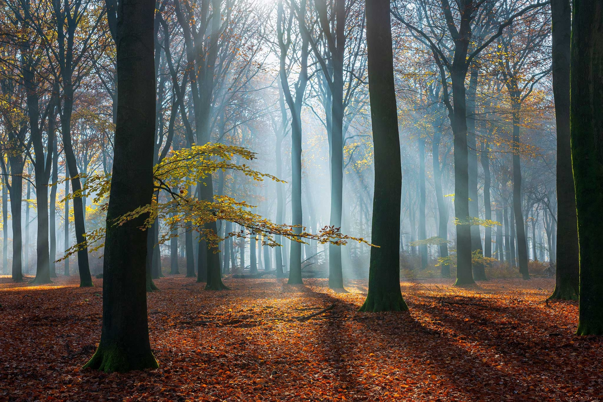 Zonnestralen door de bomen van Planken Wambuis tijdens de herfst van 2019 in de terugblik op 2019