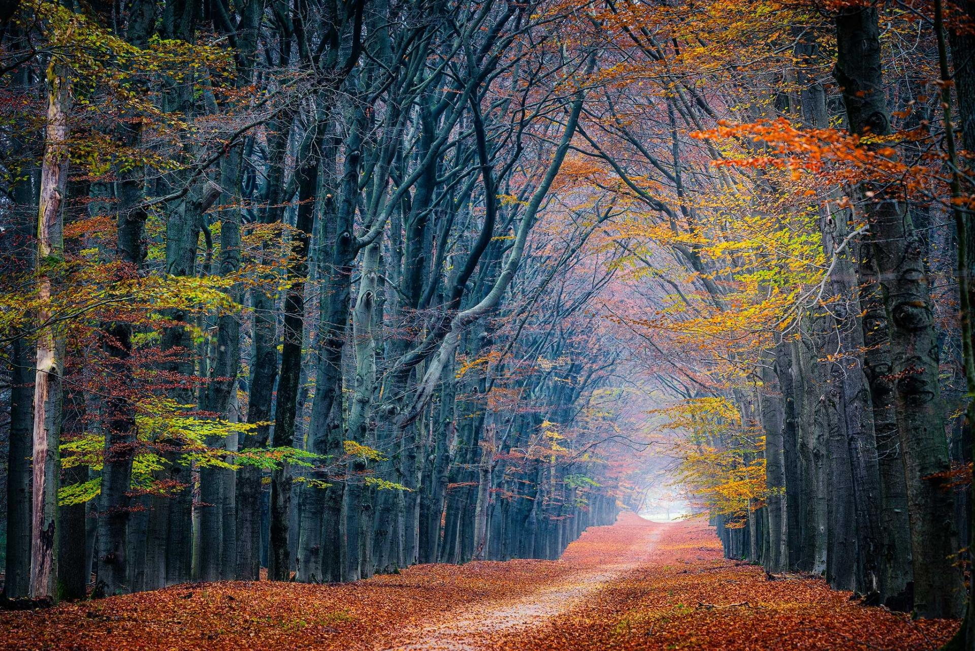 Terugblik op de laatste herfstkleuren in de Oud Reemsterlaand te Planken Wambuis