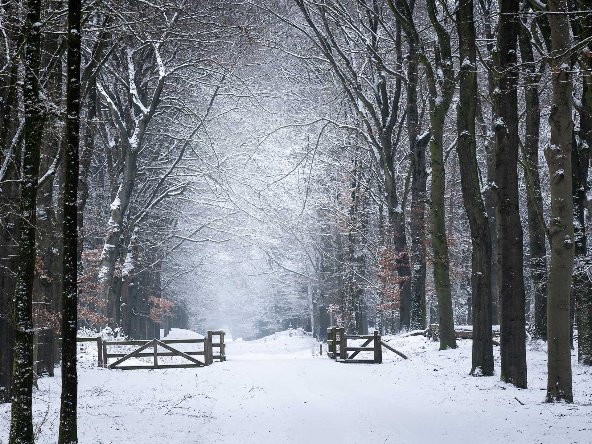Teugkijken naar Planken Wambuis en winterse setting