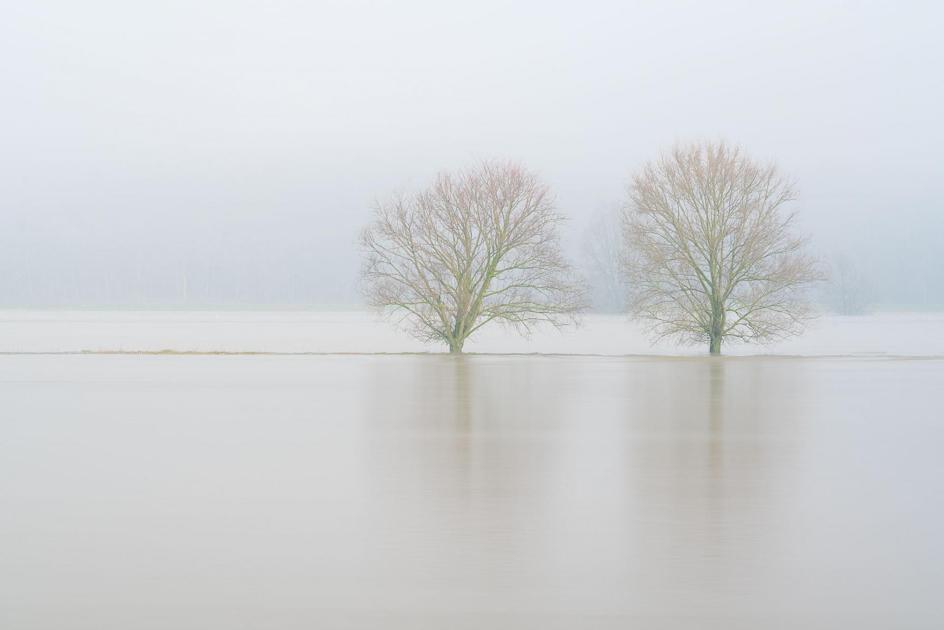 Bomen in de Rijn met hoog water bij het stuwensemble van Driel
