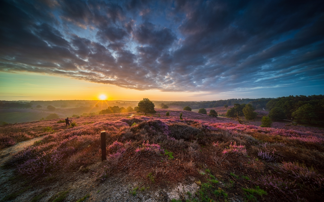 Heide landschap fotograferen, hoe doe je dat?