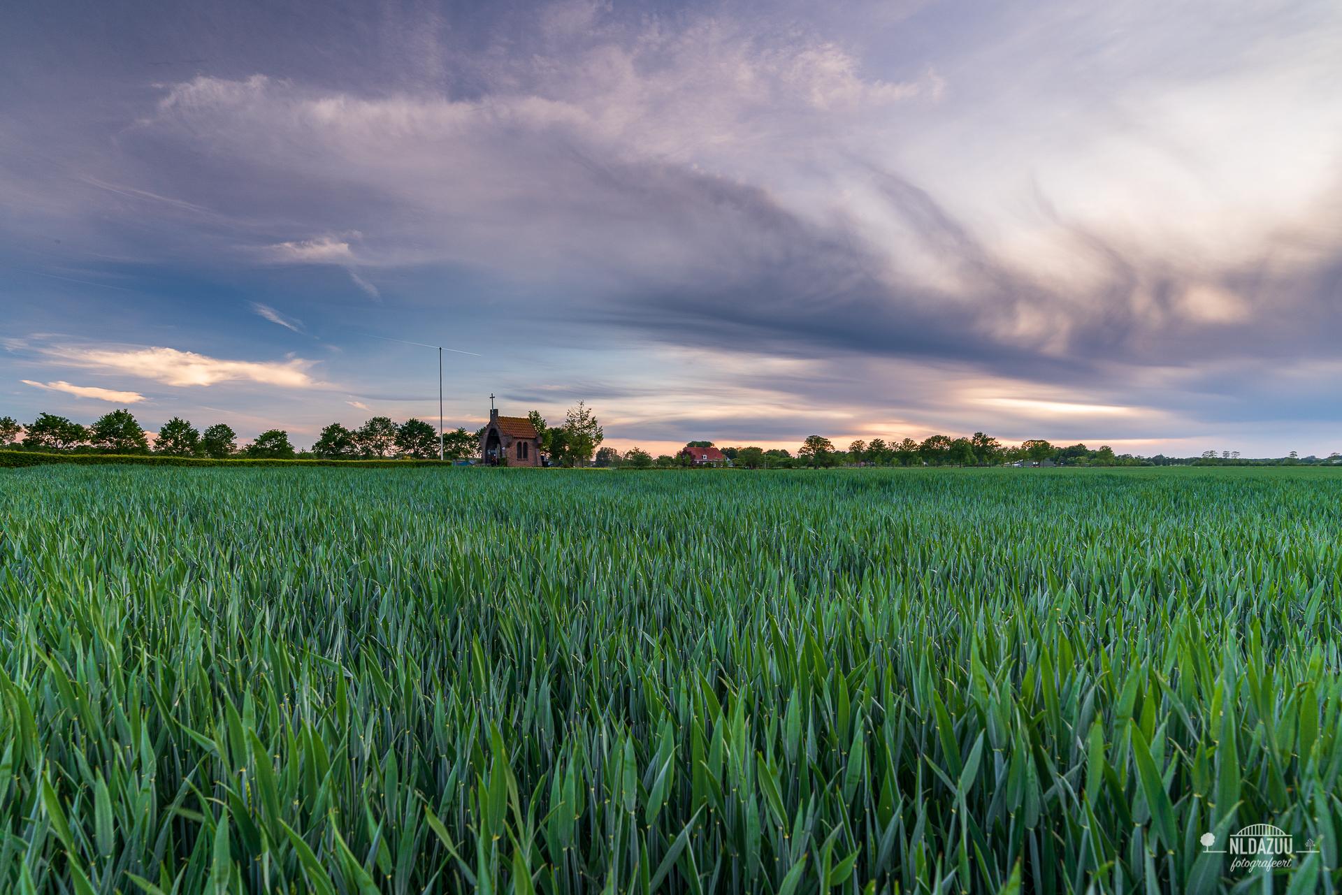 Gras in plaats van graan bij het kapelletje