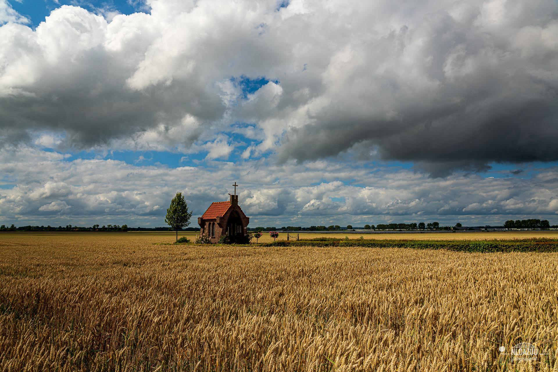 een passerende regenbui en het graan dat bijna rijp is om geoogst te worden