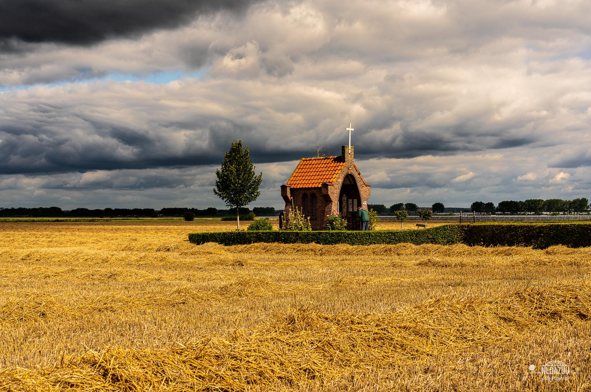 Lijnen in het graanveld