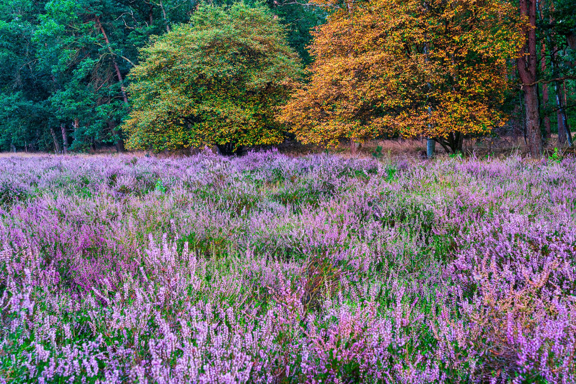 herfstsfeer op de heide van Warnsborn