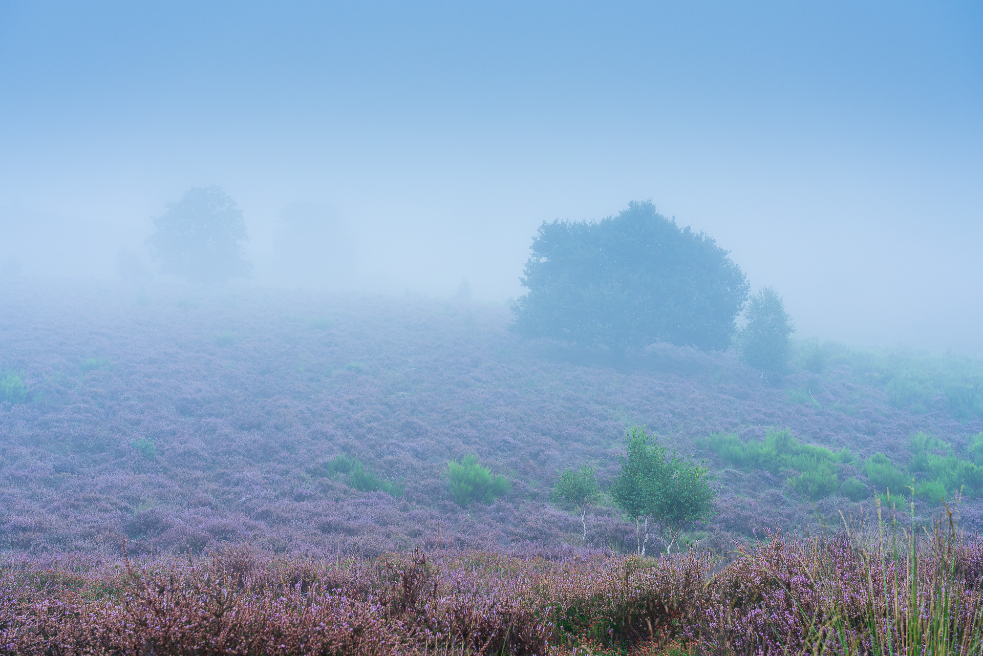 In de mist op het Herikhuizerveld
