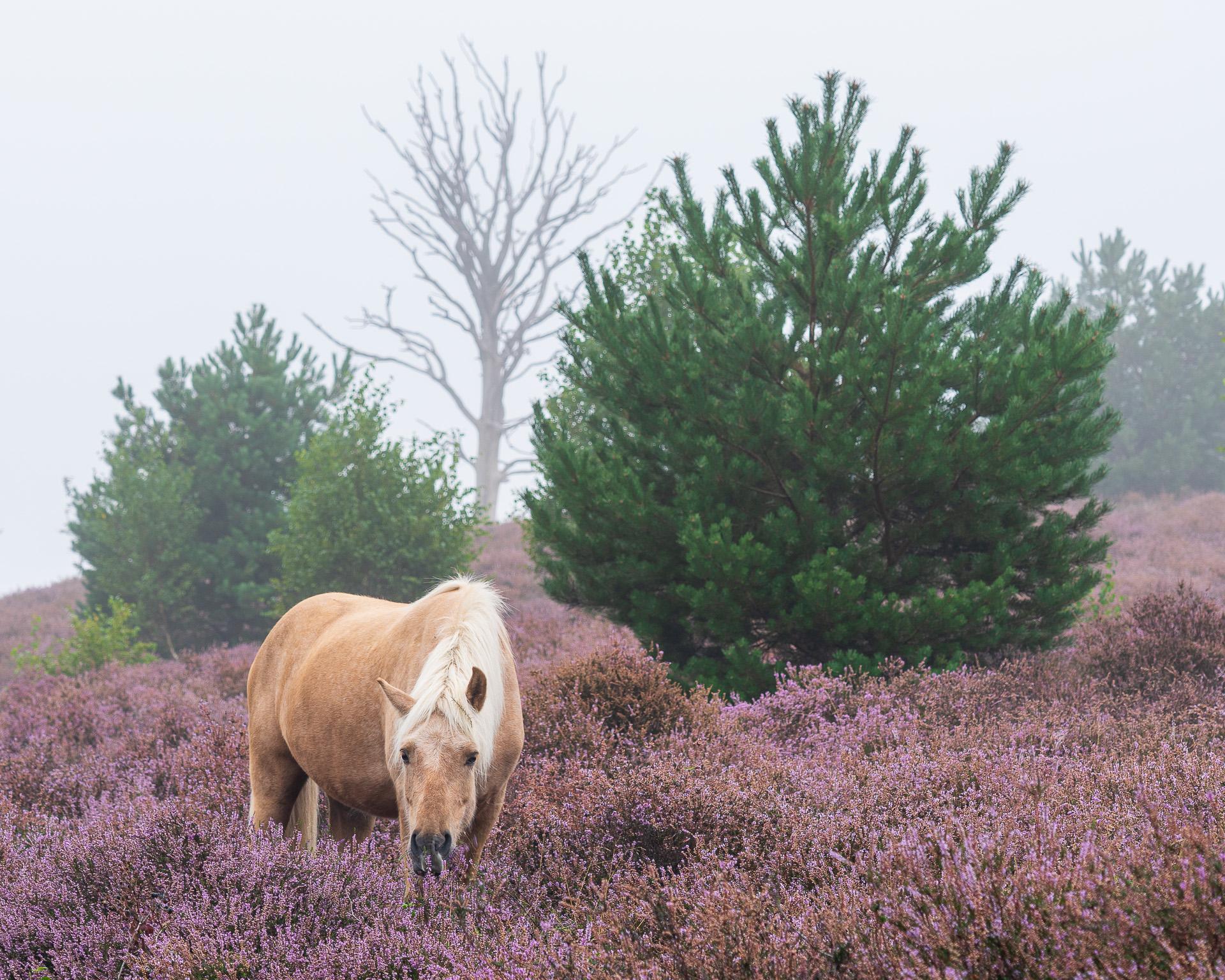 De paarden van de Posbank