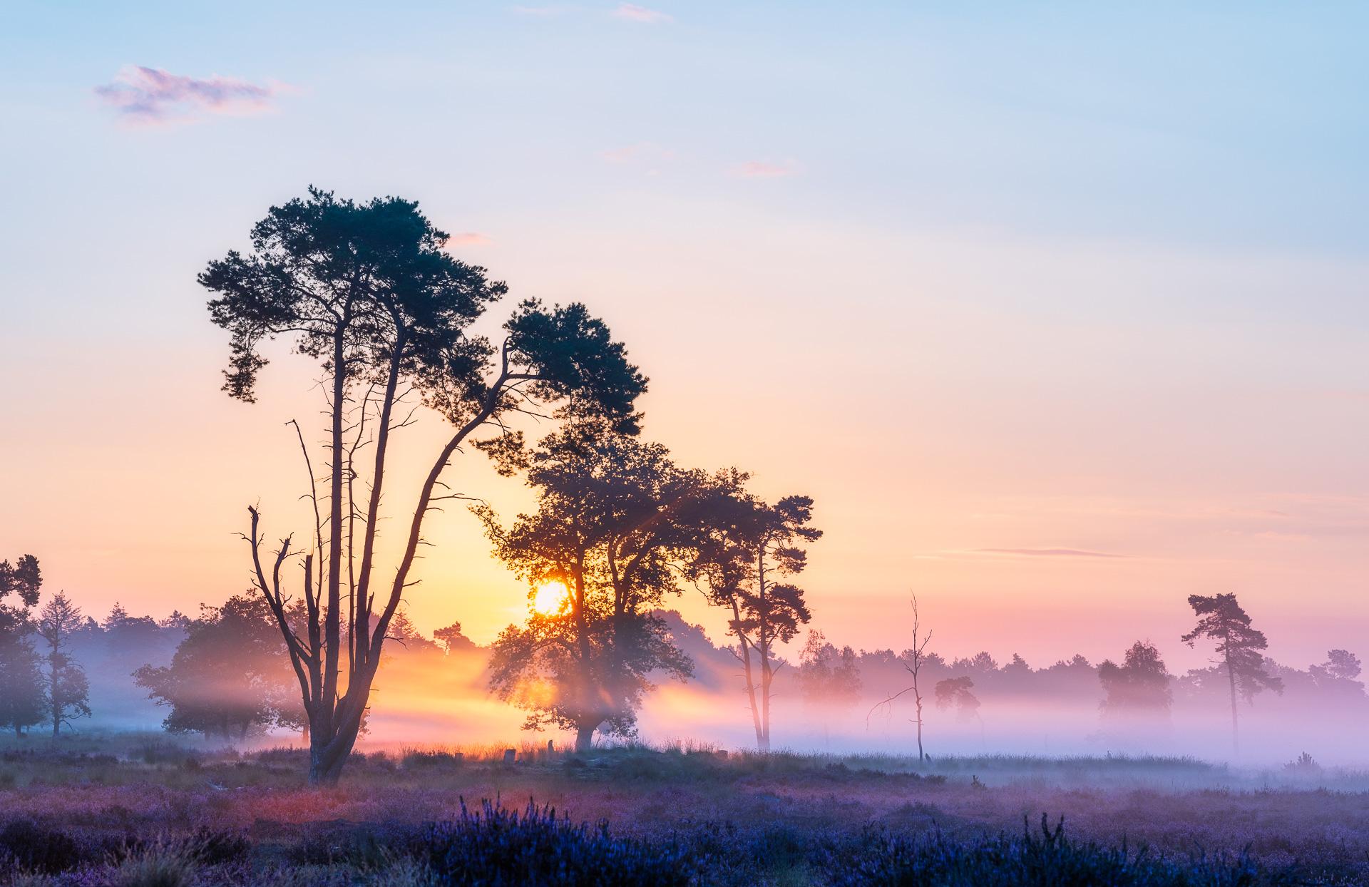 Brabantse savanne op de Loonse en Druunense duinen