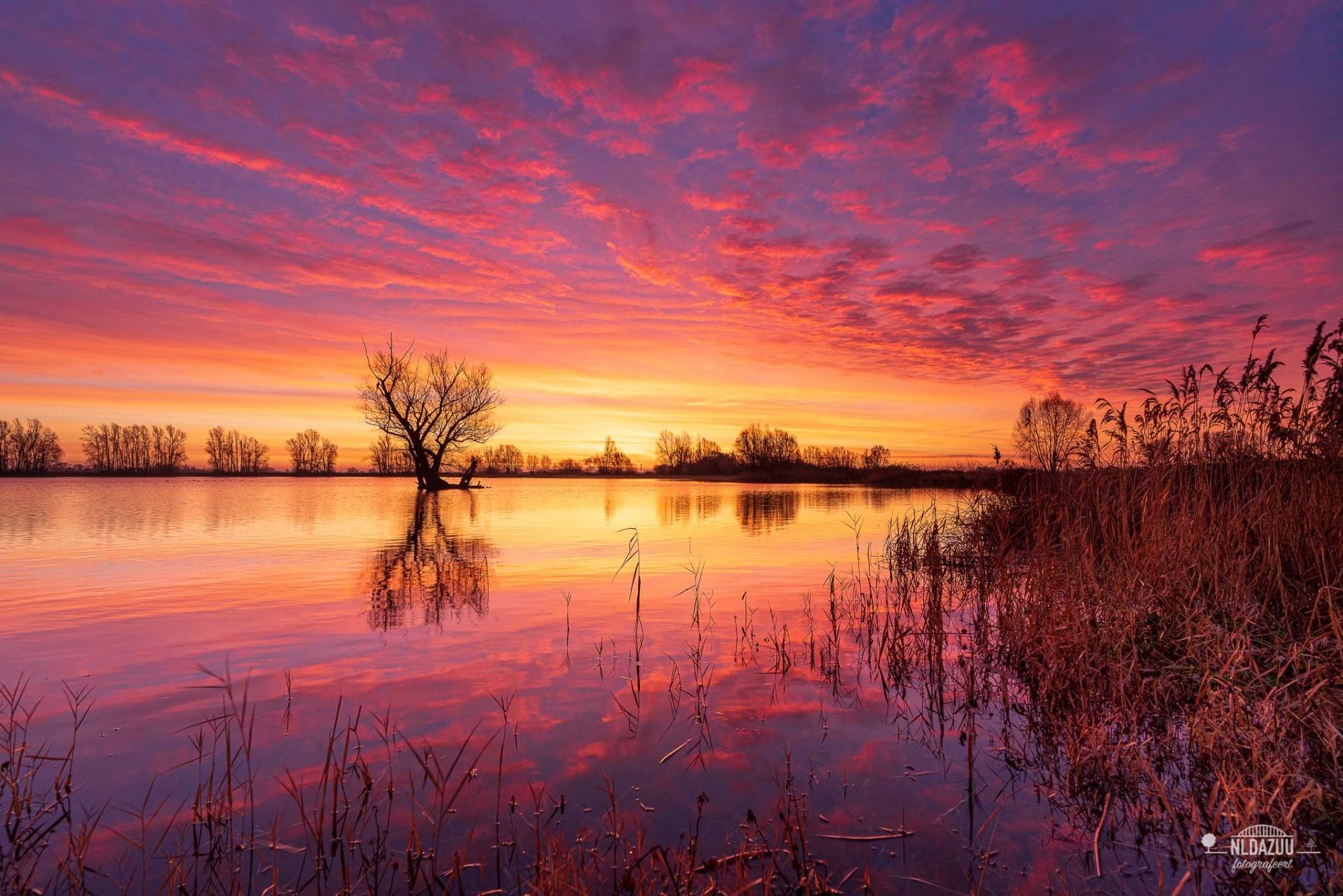 de grote bloem Huissen, kleurrijke zonsopkomst