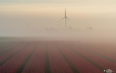 Waarom houden landschapfotografen van tulpen en tulpenvelden