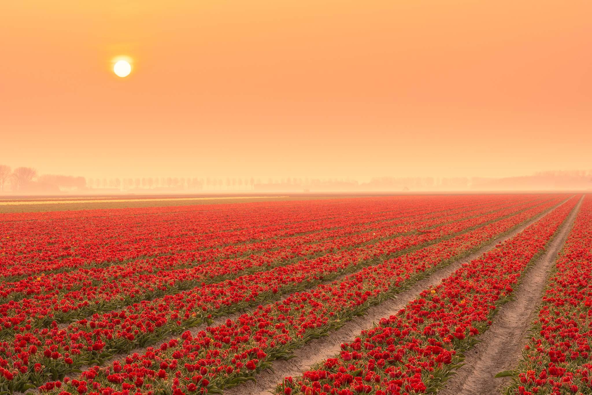 Kleurrijk bollenveld gefotografeerd door Albert Lamme